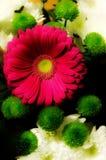 Universum von Blumen stockbild