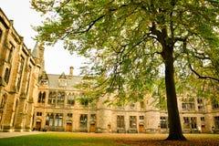 Uniwersytecki drzewo Zdjęcia Royalty Free