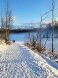 Uniwersytecki jezioro psa parka zakotwienie Alaska Obrazy Stock