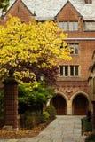 uniwersytecki Yale Zdjęcie Stock