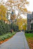 Uniwersytet Princeton jest Intymnym bluszcza liga uniwersytetem w Nowym - bydło, usa obraz stock