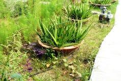 Unkempt, überwucherter Garten Stockfotos
