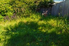 Unkempt garden 2 Royalty Free Stock Images