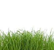 Unkempt Gras Stockfotos