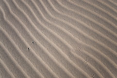 The unknow footprint in the desert Royalty Free Stock Images