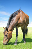 Unknow horse Royalty Free Stock Photos