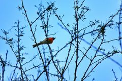Unknown Bird Stock Image