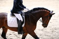 Unknown contestant rides at dressage horse event indoor in ridin. Portrait close up of dressage sport horse with unknown rider.Sport horse portrait during Stock Image
