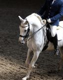 Portrait close up of dressage sport horse with unknown rider Royalty Free Stock Photo
