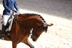 Portrait close up of dressage sport horse with unknown rider Stock Photos