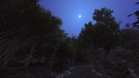 Forest in the night and the moon so bright Stock Photography