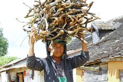 Unknown malagasy people carrying branches on heads - poverty. ANTSIRABE, MADAGASCAR, SEPTEMBER 2014, Unknown malagasy people carrying branches on heads - poverty Stock Photos