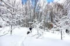 Unknown man party with his dog walking in a snowy landscape in Stock Image