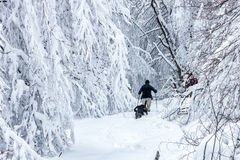 Unknown man party with his dog walking in a snowy landscape in Stock Photo