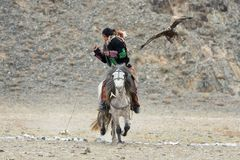 Unknown Mongolian Hunter  So Called Berkutchi  Astride On Horse And Flying Golden Eagle. Falconry In West Mongolia. Golden Eagle. Attacks Prey. Mongolian Royalty Free Stock Images