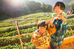 Unknown name girl holding strawberry in hands in strawberry farm at morning happy Royalty Free Stock Photos