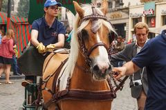BRUSSELS, BELGIUM - SEPTEMBER 06, 2014: Unknown peoples leading horse by the bridle during parade of beer manufacturers. Unknown peoples leading horse by the Stock Photos