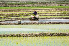 Unknown place by Caspian Sea, Iran, May 13, 2017. Man working on rice fields. Iranian man with hat working on rice field during the day with his machine stock photography