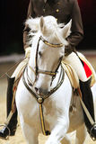 Unknown rider in action on a beautiful gray lipizzaner horse Stock Images