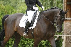 Unknown rider sitting on a dressage horse. Beautiful dressage sport horse during competition with rider Stock Photos