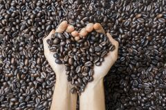Unknown woman holding roasted coffee beans Royalty Free Stock Photo