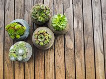 Unkosten einer Vielzahl von 5 Succulents in den konkreten Töpfen stockbilder