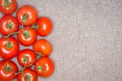 Unkosten von roten reifen Tomaten auf der Rebe Stockfotos