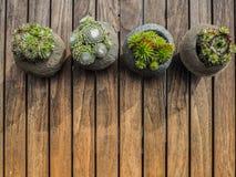 Unkosten von 4 verschiedenen Succulents in den konkreten Töpfen stockfotos