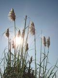 Unkräuter in der Sonne Stockfoto