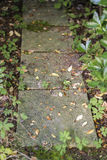 Unkräuter, die in den Sprüngen von Pflastersteinen des Gartens wachsen Lizenzfreies Stockfoto