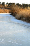 Unkräuter und gefrorener Fluss am Sonnenuntergang Lizenzfreies Stockfoto