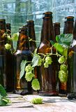 Unlabeled Beer Bottles with hops stock images
