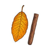 Unlabelled unlit brown Caribbean, Cuban cigar, sketch vector illustration. Isolated on white background. Whole, new hand drawn cigar, ready to smoke, tobacco Stock Images