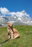 Unleashed dog and mountains Royalty Free Stock Photo
