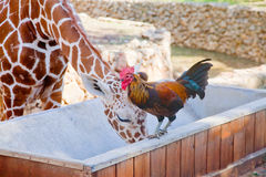 Unlikely friends Royalty Free Stock Photography