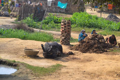 Unlikely Resources, Sacred Cow Dung, India Royalty Free Stock Photo