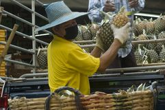 Unload. Asian man unloading pineapples from a truck Stock Photo