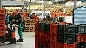 Unloading boxes of avocado, industry frui stock footage