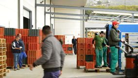 Unloading boxes of avocado, industry fruit stock video footage