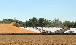 Unloading Corn Stock Images
