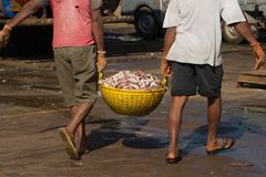 Unloading a fishing vessel in the port of southern India. Workers carry a basket with fish for weighing. Two loaders. Colleagues. Teamwork. Team spirit. fresh royalty free stock photos