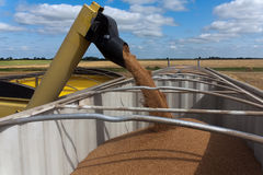 Unloading Grain Stock Photo