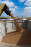 Unloading Grain. Grain is unloaded into a grain truck by an auger during harvest Royalty Free Stock Photos