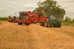 Unloading harvested barley to be transported to farm. Royalty Free Stock Photos