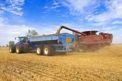 Unloading the harvested wheat into a skip Royalty Free Stock Photo