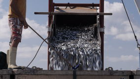 Unloading sardines. A fishing boat unloads its catch of sardines stock footage
