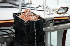 Unloading snow crabs Royalty Free Stock Photo