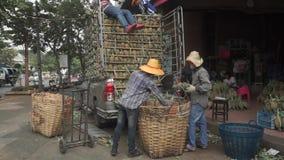 Unloading truck full of pineapples in Bangkok. Medium shot stock video footage