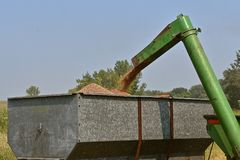 Unloading wheat into a grain box Royalty Free Stock Photography