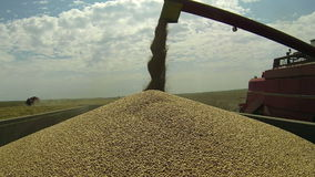 Unloading Wheat Grain stock video